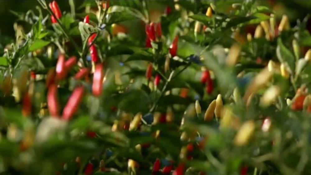 Popeyes Tabasco Spiced Pepper Barrel Tenders TV Spot