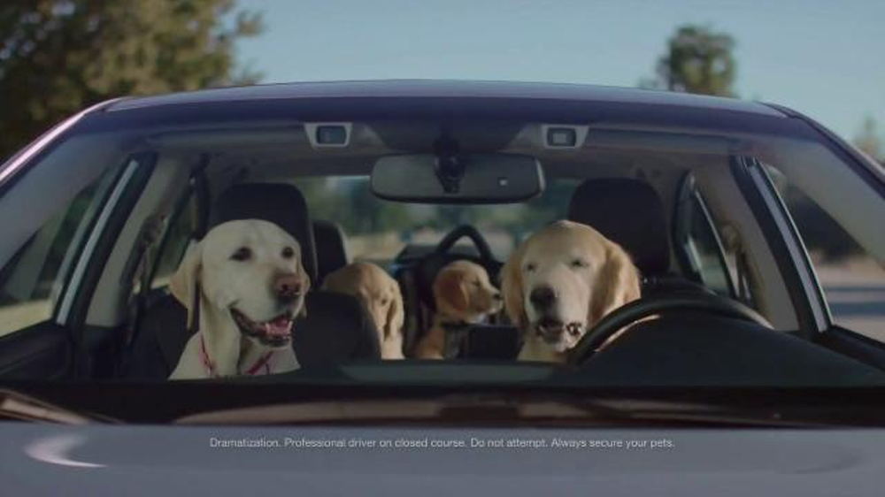Subaru TV Spot, 'Dog Tested: Phone Navigation' - iSpot.tv