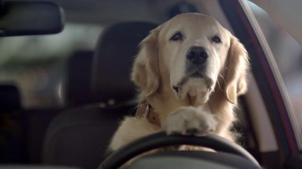 Song In Subaru Commercial 2017 >> 2018 Subaru Dog Commercial - New Car Release Date and Review 2018   Amanda Felicia