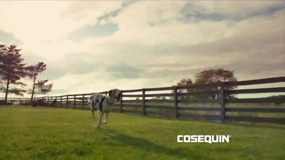 cosequin tv commercial 39 on the farm 39 song by the tokens. Black Bedroom Furniture Sets. Home Design Ideas