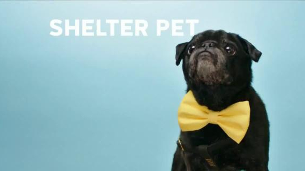 the shelter pet project Keyboard cat, toast meets world and hamilton pug have joined the shelter pet project—a partnership between the humane society of the united states, maddie's fund.
