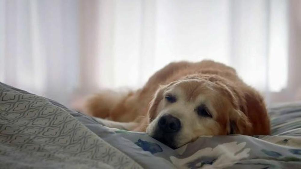 Kmart Home Sale TV Spot Sleep Like a Dog iSpot