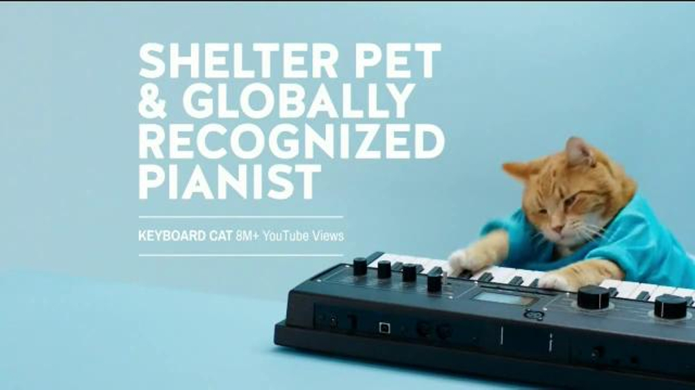 "the shelter pet project Shelter pet adoption ""the shelter pet project"" campaign sponsors: the humane society of the united states and maddie's fund® volunteer advertising agency: jwt."