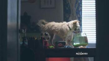 November Weekend Sale: Pet Holiday Treats thumbnail