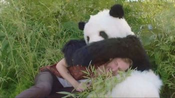 Panda Breaks the Internet
